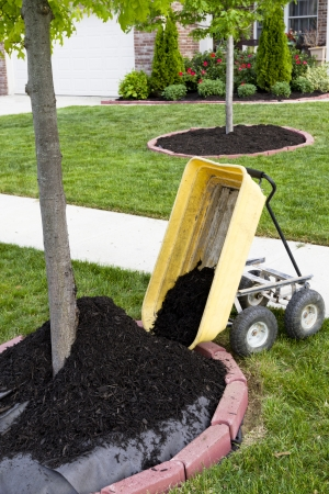 Neighborhood beautification starts with a mulching operation around the tree trunks. photo