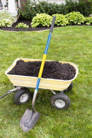 Mulching the around the house with dumping cart and showel. Nice weekend project. Stock Photo