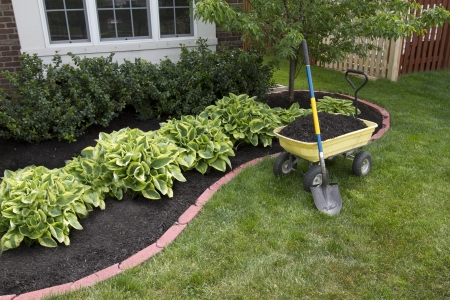 Mulching bed around the house and bushes, wheelbarrel along with a showel. Stock Photo