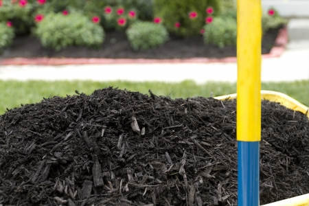 compost: Mulch in wheelbarrow waiting to be layed. Get moving.