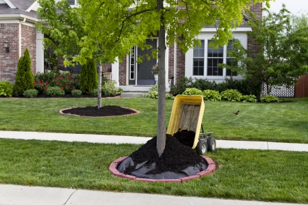 mulch: Maintaining house, quickest way to improve how your garden looks is mulching. Mulching makes big impact how your garden looks. Stock Photo