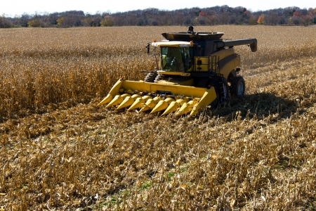 corn stalk: End of the summer, corn harvesting started.