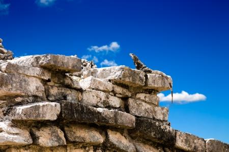 Iguana posing on Mayan Ruins
