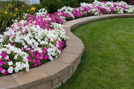 paisajismo: Peink y petunias blancas en la cama de flores, junto con la hierba