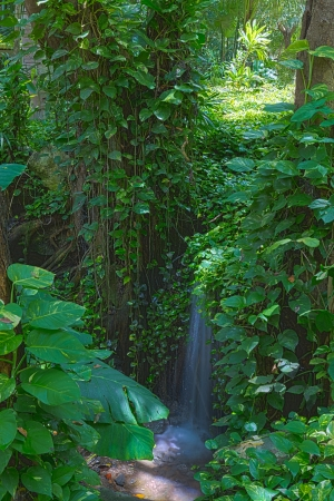 Beautiful natural background image of a tranquil waterfall in a lush green rainforest with dense foliage photo