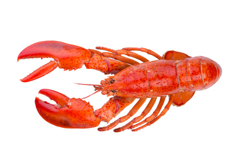 lobster: Isolated red lobster just came out from the Atlantic Ocean
