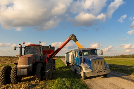 truck crops: Loading crop of corn to Semi Truck from combine harvester after harvest Stock Photo