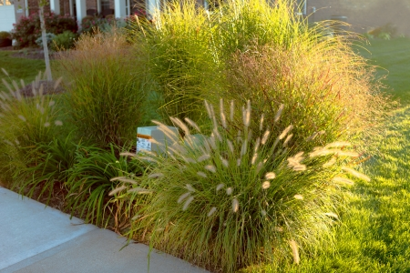 grasses: Neighborhood beautification, hiding underground power line and telecommunication boxes with giant ornamental grasses in the neighborhood Stock Photo