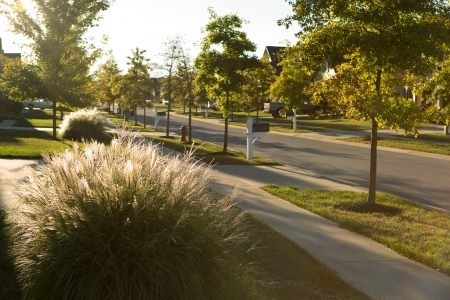 ornamental horticulture: Neighborhood landscape design with ornamental grasses Stock Photo