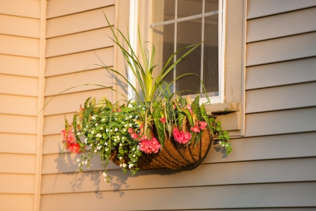 house siding: Sunset time, flower box with coco liner in front of the window, horizontal