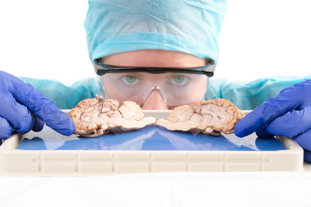 Female anatomy student, medical technologist or pathologist with a dissected cow brain slice through the mid section to show the convoluted tissue of the lobes