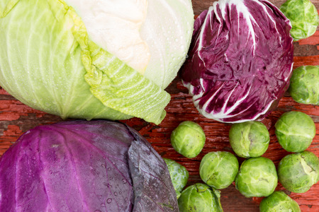 Close up overhead view of a selection of different fresh crucifies including green cabbage, red cabbage, radicchio and brussels sprouts for use as ingredients in healthy vegetarian cuisine