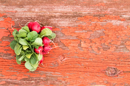 edible leaves: Bunch of fresh red crispy radishes with their edible leaves lying on a grungy rustic wooden board with cracked peeling paint and copyspace Stock Photo