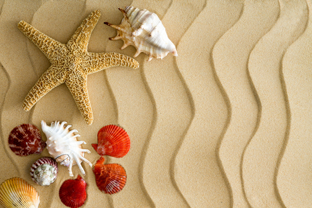 Starfish and sea shells on the wavy bech sand with copy space on the right side photo