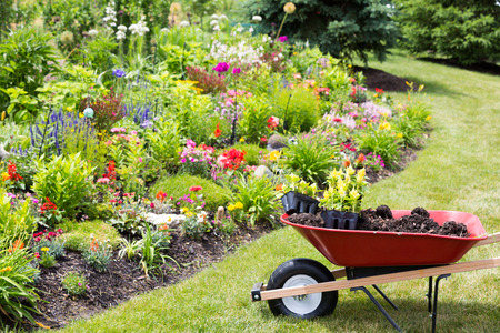 Transplanting new spring plants into the garden with a wheelbarrow full of manure and celosia seedlings standing on a neat lawn alongside a newly planted colorful flowerbed Stock Photo