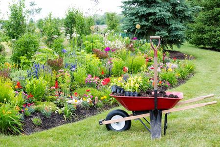 carretilla: Trabajo que se realiza en el patio paisajismo del jardín con una carretilla roja de pie sobre un césped bien cuidado junto a un nuevo parterre lleno de plantas con flores de colores