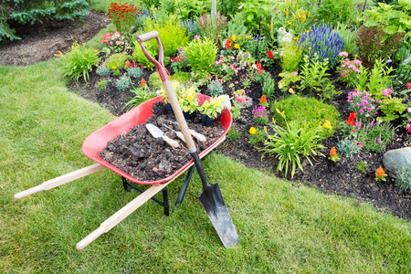 manicured: Garden work being done landscaping a flowerbed with a red wheelbarrow full of organic potting soil and celosia seedlings standing with a spade on a manicured lawn alongside a bed of colorful flowers