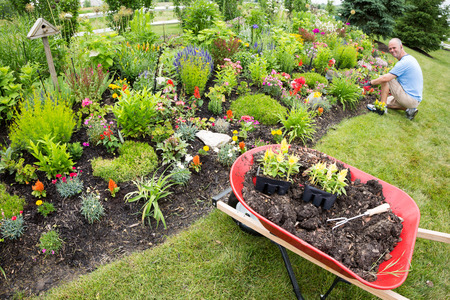 manicured: Man planting in the garden with gardening tools close by under the sun