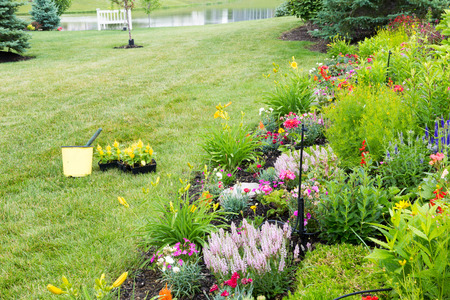 Planting new flowers in a spring garden with colorful yellow celosia seedlings on a lawn alongside a landscaped flowerbed of colorful ornamental and flowering plants Banco de Imagens