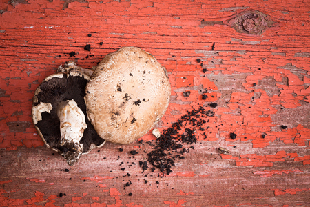 gills: Freshly picked organic portobello mushrooms, one showing the gills and one the cap, with loose soil lying on a grunge red painted wood table with flaking paint