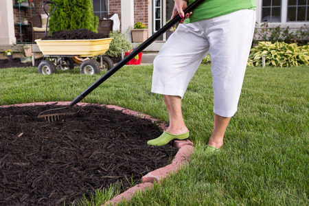 Close up view of the legs of a senior woman in white pants mulching a flowerbed spreading the mulch with a rake