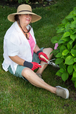 weeding: Fit active senior lady working in the garden sitting on the lawn alongside a hydrangea bush with her trowel and fork weeding around the bush Stock Photo