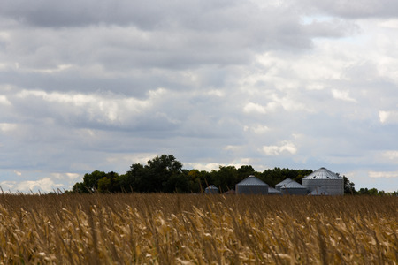 midwest usa: Metal grain silos for storing cereals and grain at the edge of an agricultural field of ripe corn ready for harvesting as a foodstuff and livestock feed in midwest USA Stock Photo