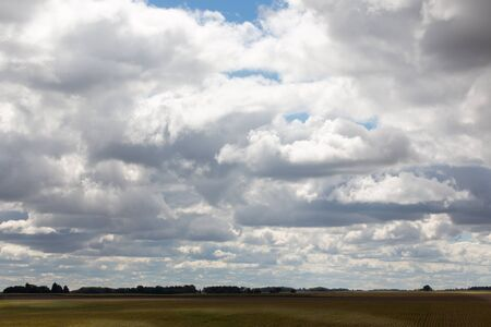 High angle wide angle panoramic view of the ripening cornfields in the American Midwest under a cloudy sky