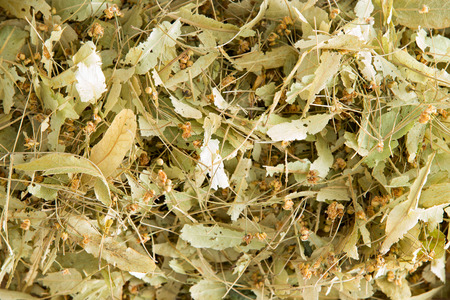 linden flowers: Dried linden flowers Stock Photo