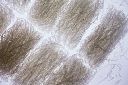 dietary fiber: Overhead view of coils of transparent dried mung bean thick vermicelli noodles, also known as cellophane or glass noodles, rich in starch dietary fiber and vitamins Stock Photo