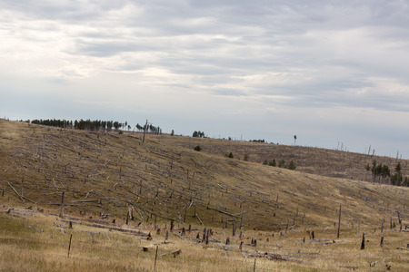 remnants: Deforested hillside with remnants of felled trees from a pine plantation used to provide energy, timber and lumber leaving behind denuded bare earth