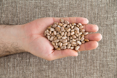 mottled skin: Man holding a handful of dried pinto beans displayed in his palm, a variety of kidney bean with a mottled skin popular in the United States, overhead view Stock Photo