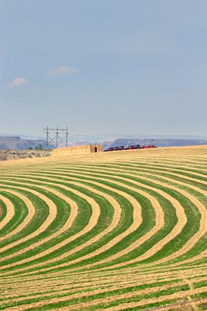 land use: Centro perno fattoria campo irrigato mostrando le righe alternate di semina per consentire la rotazione lungo le linee circolari del sistema sprinkler ruote Archivio Fotografico