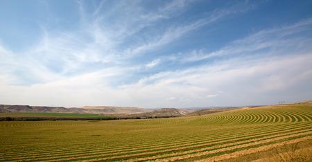 land use: Paesaggio scenico di appartamento aperta campagna in una fattoria perno centrale che mostra l'impianto della coltura alternativa per consentire la rotazione e il movimento delle capriate che trasportano gli irrigatori irrigazione