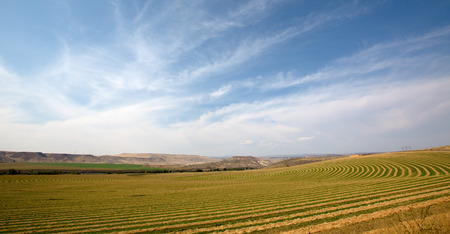 land use: Scenic landscape of flat open countryside on a center pivot farm showing the alternate planting of the crop to allow for the rotation and movement of the trusses carrying the irrigation sprinklers Stock Photo