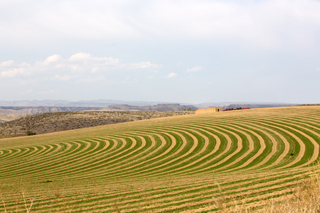 pivot: Center pivot irrigated farm showing a sloping field with alternating rows of planting with fallow to allow the rotation of the wheeled trusses carrying the sprinklers forming a curving pattern