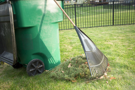Raking up grass cuttings in spring during yard maintenance with a heap of clippings and a tined rake standing on a neatly manicured lawn alongside a plastic wheelie bin for composting