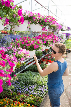 Potted plants: Trendy woman selecting nursery plants looking at shelves of potted pink petunias above an assortment of smaller flowering plants as she chooses houseplants to beautify her home in spring