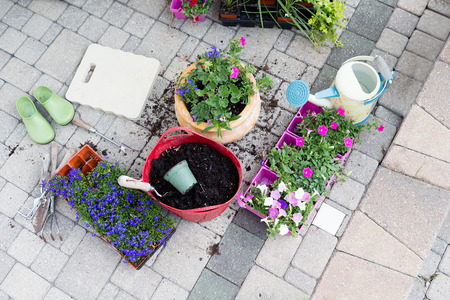 transplanted: Nursery seedlings, potting soil and flowerpots with newly planted flowers standing on a brick patio with trays of plants waiting to be transplanted in a gardening and home enhancement concept Stock Photo