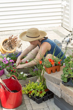 enhance: Attractive woman potting up nursery seedlings into decorative arrangements in flowerpots to enhance her home and patio on a hot spring day