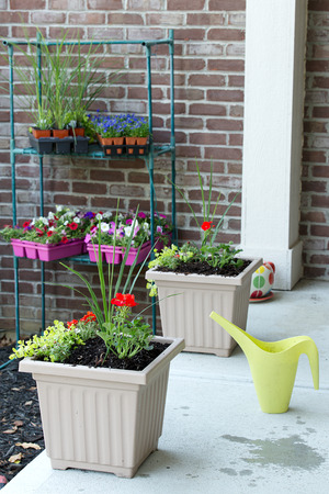 transplanted: Newly planted ornamental spring flowers in flowerpots arranged in a row along an outdoor patio with trays of new seedlings hanging in a rack on the wall waiting to be transplanted Stock Photo