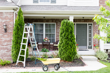 Springtime trimming of Arborvitae or ornamental evergreen Thuja trees growing in a flowerbed in front of a house using a stepladder, trimmer and small yellow cart to remove debris and foliage