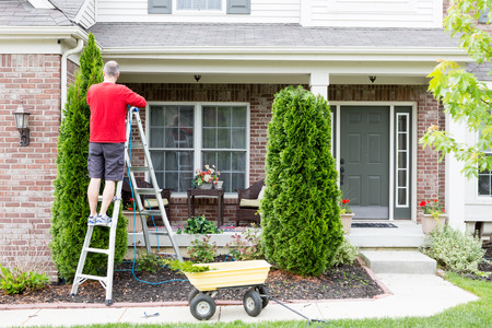 tapering: Yard work around the house trimming Thuja trees or Arborvitae with a middle-aged man standing on a stepladder using a hedge trimmer to retain the tapering ornamental shape