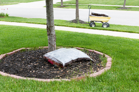 mulch: Mulching around the trunk of a tree in a neat circular flowerbed with a pocket of commercial organic mulch from a nursery at the start of spring in a yard work concept