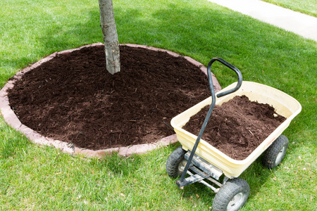 Mulch work around the trees growing in the backyard during springtime with a small yellow metal wheelbarrow full of organic mulch from the nursery standing alongside a round flowerbed around a sapling Stock Photo