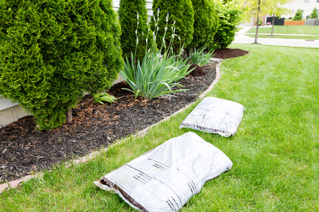 mulch: Mulching flowerbeds around the house with bags of organic mulch from a nursery lying on a green lawn alongside a bed containing shrubs and evergreen Thuja trees in a yard work concept