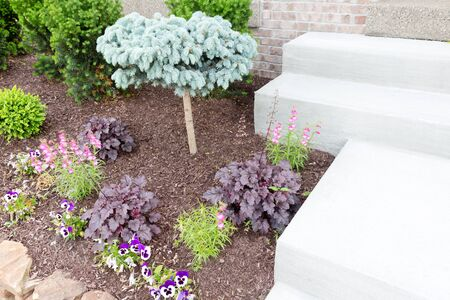 ornamental garden: Ornamental miniature or dwarf pine tree growing amongst seasonal flowers in a flowerbed alongside steps in a formal garden with landscaped flowerbeds