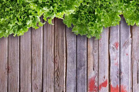 lettuces: Overhead border view of clean leafy lettuces on wooden market table with copy space.
