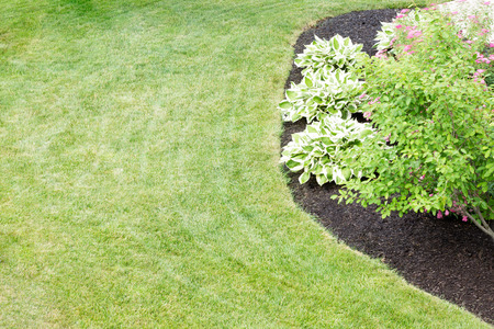 Mulched flowerbed with decorative hosta plants cultivated for their ornamental foliage in a neatly manicured green lawn in a formal landscaped garden viewed high angle