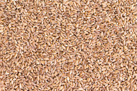 hulled: Background texture of healthy hulled pearled farro wheat seeds a speciality crop grown in parts of Asia and Europe, particularly Italy Stock Photo